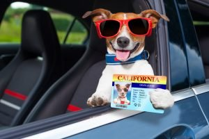 SafetySock Blog - How Does Graduated Driver Licensing Work?